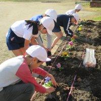 春の花壇づくり。  縦割班で愛校作業を行いました。