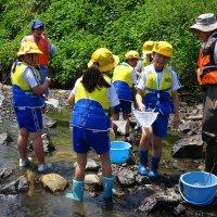 4年生 水生生物調査をしました