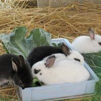 ウサギの赤ちゃんが生まれたよ