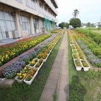 花壇やプランターの花の数が増えてきましたね!